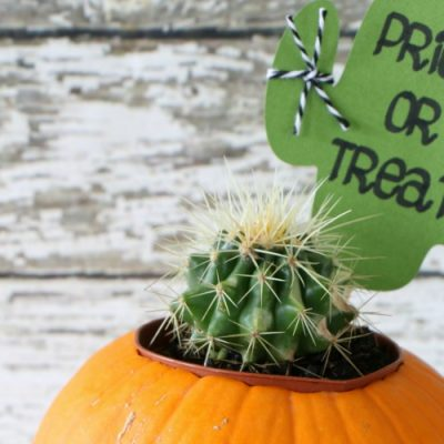 Prick or Treat Halloween Cactus Gift Idea