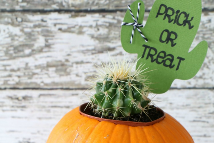 Prick or Treat Halloween Cactus Gift Idea