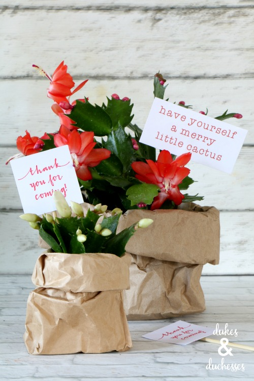 blooming christmas cactus gift idea