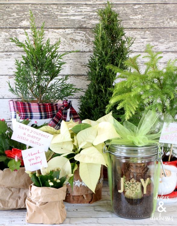 easy plant gift ideas