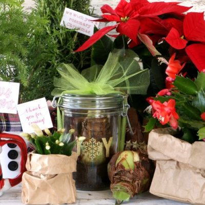 6 Easy Ways to Gift Plants for the Holiday Season