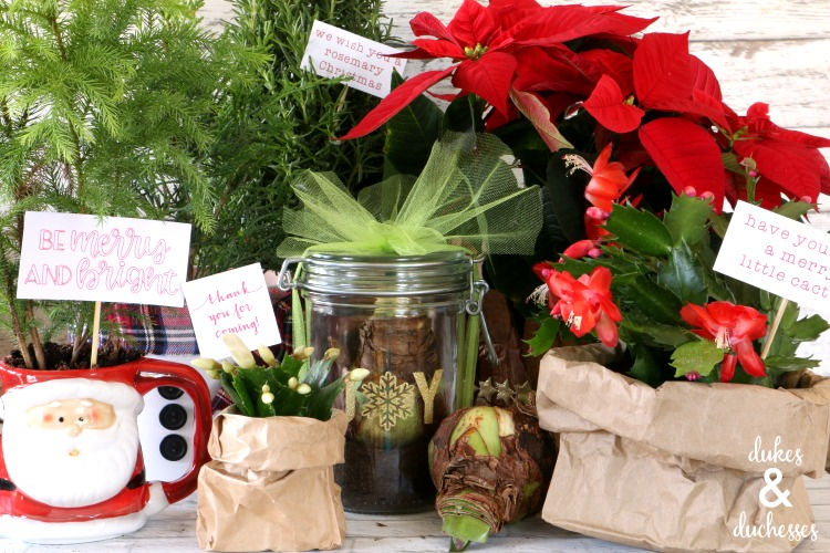 plant gift ideas from calloways