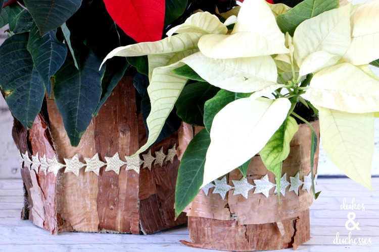 poinsettia gift ideas