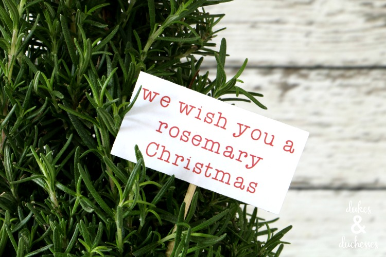 printable tag for rosemary plant gift