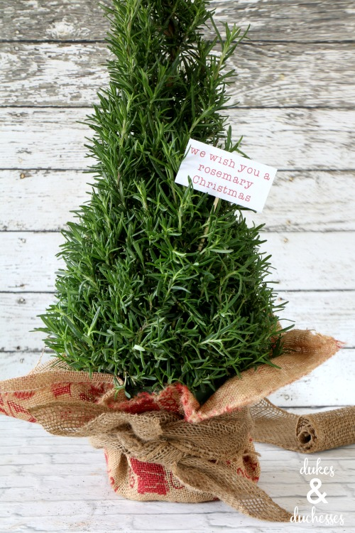 rosemary plant gift with printable tag