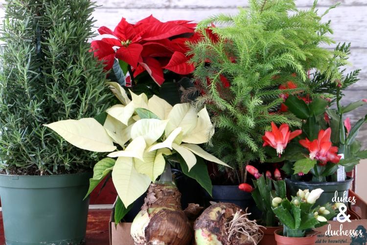 seasonal plants from calloways