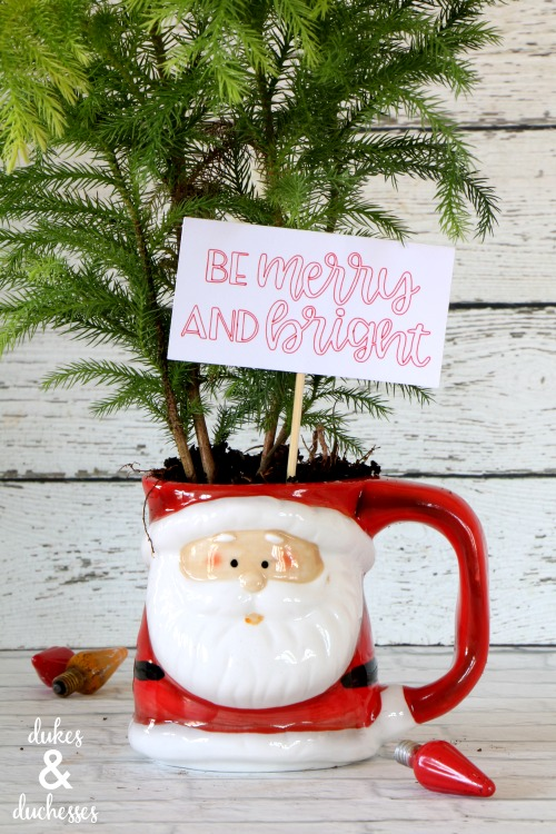 small christmas tree in santa mug