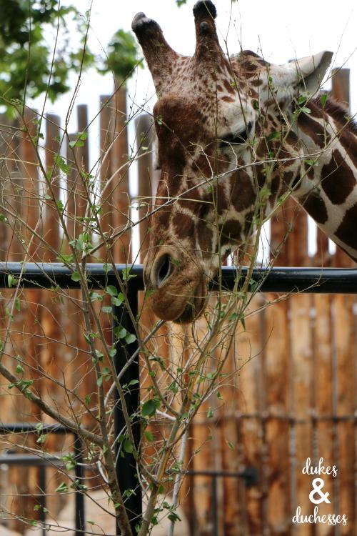 ABQ BioPark Zoo in albuquerque nm