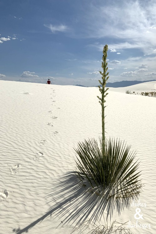 what to do at white sands national monument