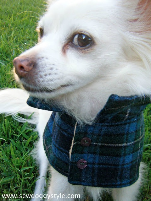 DIY flannel dog coat pattern