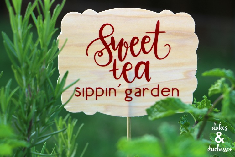 how to plant a sweet tea garden